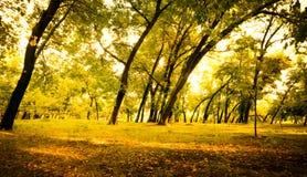 Foresta nel parco di autunno immagine stock