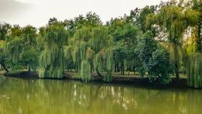 Foresta nel parco di autunno fotografia stock