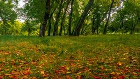 Foresta nel parco di autunno fotografie stock