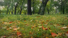 Foresta nel parco di autunno fotografie stock libere da diritti