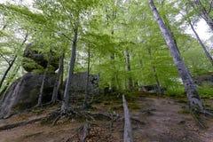Foresta nel parco di Polyanitsky Fotografie Stock