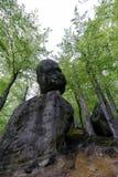 Foresta nel parco di Polyanitsky Immagine Stock