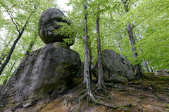 Foresta nel parco di Polyanitsky Fotografie Stock Libere da Diritti