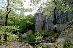Foresta nel parco di Polyanitsky Fotografia Stock