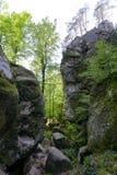 Foresta nel parco di Polyanitsky Immagine Stock Libera da Diritti
