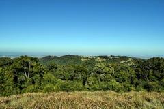 Foresta nel parco nazionale di Bunya Fotografia Stock