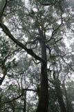 Foresta nel parco nazionale di Garajonay, La Gomera Fotografia Stock