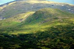 Foresta nel parco nazionale di Roltdalen e di Skarvan Immagini Stock