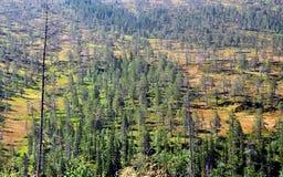 Foresta nel parco nazionale di Roltdalen e di Skarvan Immagine Stock