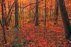 Foresta nel segmento di Monches della traccia di periodo di glaciazione Fotografia Stock Libera da Diritti