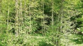 Foresta nel tempo di molla dovuto del sud della Germania immagine stock