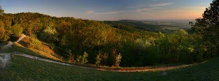 Foresta nel tramonto. Immagine Stock
