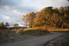 Foresta nel tramonto Fotografia Stock
