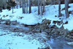 Foresta nell'inverno fotografia stock libera da diritti