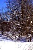 Foresta nell'inverno Fotografie Stock