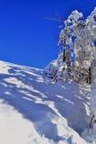 Foresta nell'inverno Fotografie Stock Libere da Diritti