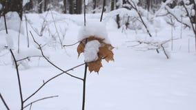 Foresta nell'inverno video d archivio