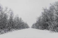 Foresta nell'inverno Fotografia Stock