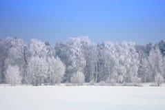 Foresta nell'orario invernale fotografia stock libera da diritti