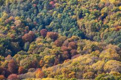 Foresta nella caduta fotografia stock libera da diritti