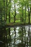 Foresta nella campagna inglese Immagini Stock Libere da Diritti
