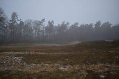 Foresta nella distanza con il cielo di inverno fotografia stock