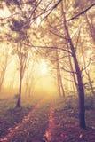 Foresta nella foschia Fotografia Stock