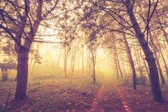 Foresta nella foschia Fotografie Stock