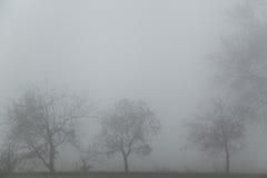 Foresta nella nebbia Fotografia Stock
