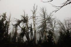 Foresta nella nebbia Fotografie Stock Libere da Diritti