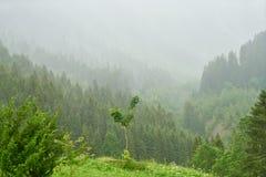 Foresta nella nebbia nelle alpi francesi Immagini Stock Libere da Diritti