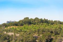 Foresta nella provincia di Catalunya, Spagna Copi lo spazio Fotografia Stock