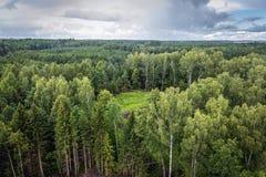 Foresta nella regione di Masuria Fotografie Stock