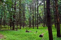 Foresta nella Virginia fotografia stock