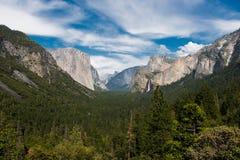 Foresta nelle montagne Immagini Stock