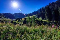 Foresta nelle montagne Immagini Stock Libere da Diritti