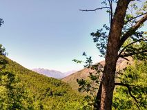 Foresta nelle montagne delle Ande nel Cile fotografie stock libere da diritti