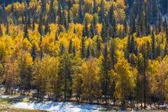Foresta nelle montagne di Altai, Russia di autunno nave Immagini Stock Libere da Diritti