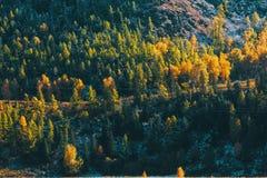 Foresta nelle montagne di Altai, Siberia di autunno Immagini Stock