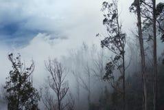 Foresta nelle nuvole Fotografie Stock