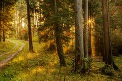 Foresta nera Fotografie Stock