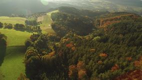 Foresta nera all'autunno video d archivio