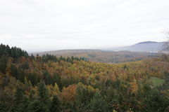 Foresta nera in autunno Fotografie Stock