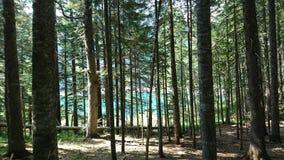 Foresta nera e lago verde Immagine Stock Libera da Diritti