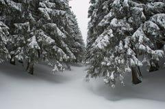Foresta nevicata Fotografia Stock