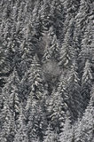 Foresta nevicata Immagine Stock Libera da Diritti