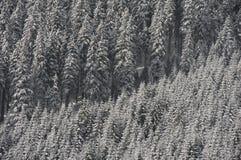 Foresta nevicata Fotografie Stock Libere da Diritti