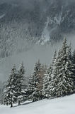 Foresta nevicata Immagini Stock Libere da Diritti