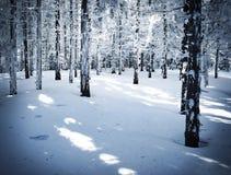 Foresta nevosa attillata densa immagini stock