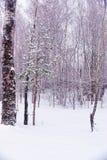 Foresta nevosa di inverno Immagine Stock